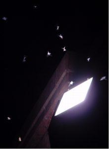 Nächtliche Beleuchtung wirkt sich weltweit als tödliche Falle für Insekten aus  darunter befinden sich auch bedrohte Arten.